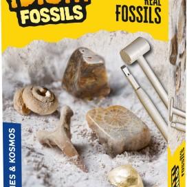630461_Fossils-Excavation_3dbox.jpg