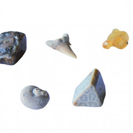 630461_Fossils-Excavation_model.jpg