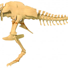 632120-Giant-Dino-Skeleton-model.jpg